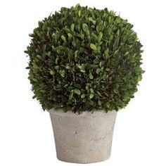6a41c447c9b42beb9b0625ea17428fae--boxwood-topiary-topiaries